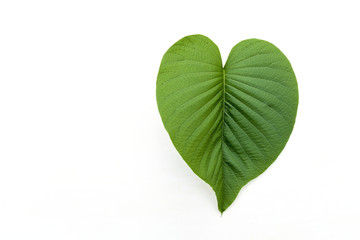 Green heart shape leaf on white background