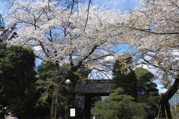 Shimizukouen 9