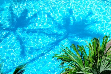 プールの中のヤシの木の影