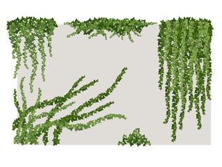 Ivy on wall Wall mural