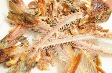 Fisch3105a