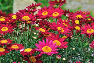 photos illustrations et vid 233 os de quot plantes vivaces quot