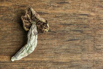 Magic Mushrooms on Wood