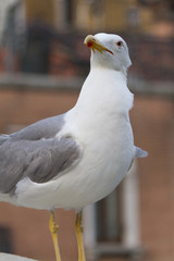 seagull posing for the photographer