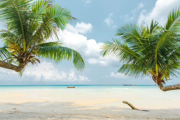 Wall Mural - Coconut palm tree at the beautiful beach