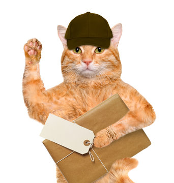 Cat with brown paper parcels delivery .