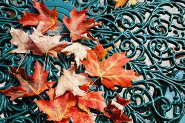 Red maple leaves. Symbol of autumn