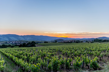 Couché de soleil sur les vignes dans le Beaujolais