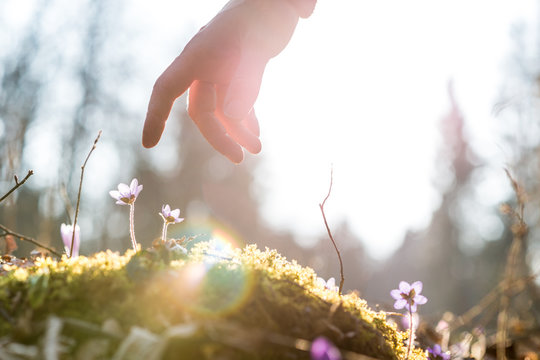 Hand of a man above a blue flower back lit by the sun