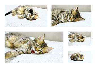 montage,chaton,dormir,sieste,repos,calme