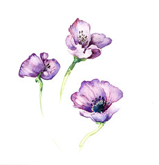 The purple flowers watercolor isolated on the white background