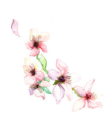 The spring  branch dissolve flowers watercolors isolated on the white background