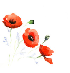 the poppy watercolor isolated on the white background