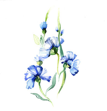 The blue flowers watercolor isolated on the white background
