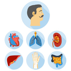 Flat design icons of human anatomy.