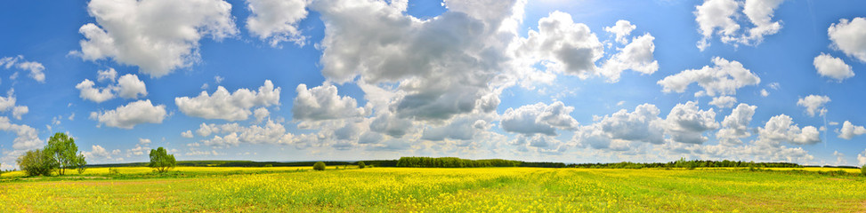 Panorama of flower field in spring countryside