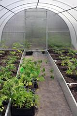 Greenhouses plantations