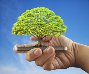 Tree over smartphone