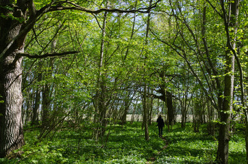 Walking in the fresh green forest
