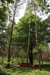 Auto od drzewami w lesie.