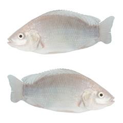 tasty white tilapia fish