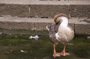 Duck Fourteen