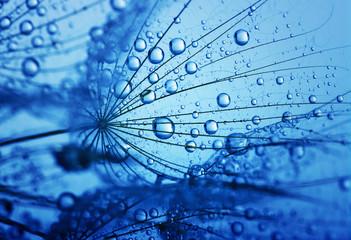 Photo sur Aluminium Pissenlits et eau dandelion flower