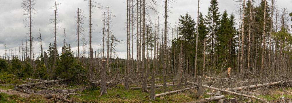 zerstörter Wald im Harz