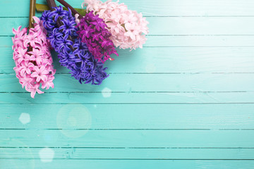 Background with fresh flowers hyacynths