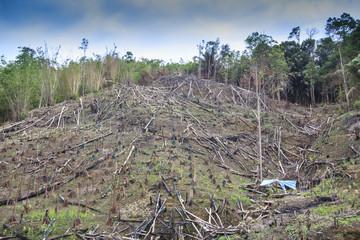 Deforestation environmental destruction logging of rainforest in Borneo Malaysia