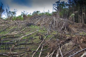 Deforestation logging of rainforest in Malaysia