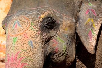 Colorful elephant in Jaipur, India