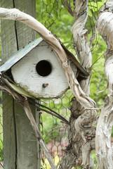 Birdhouse in tree limb