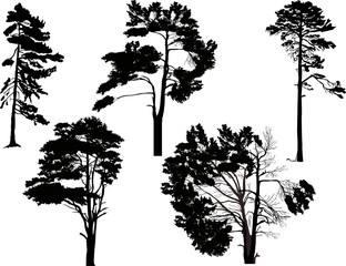 five black trees set isolated on white