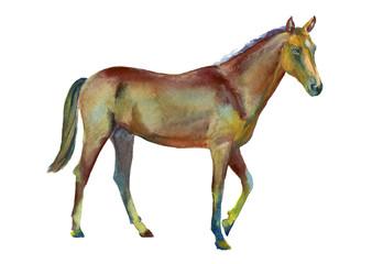 Watercolor standing horse