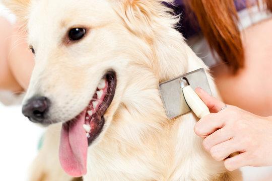 Woman brushing her dog