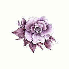 Rose. Lilac watercolor flower.