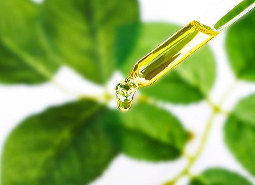 Organic essence. Essential oil Skin care,alternative medicine.