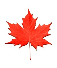 red maple leaf vector