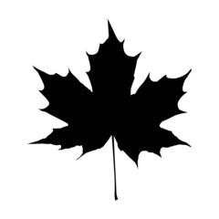 black maple leaf vector