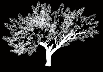 white tree sketch isolated on black