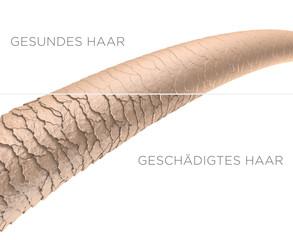 Haar-Struktur - gesundes und geschädigtes Haar: 3D-Illustration