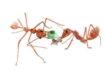 social ant illustration