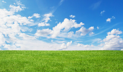 Photo sur Plexiglas Sauvage Green field and blue sky