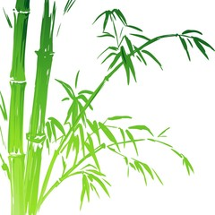 Watercolor Bamboo branches isolated on the white background