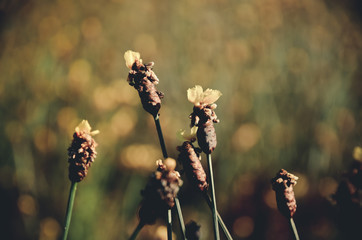yellow,flowers,color,vintage,tone,background,wall,isolated,green