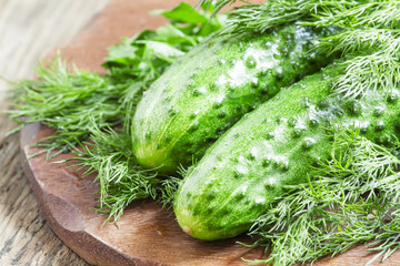 Fresh  cucumbers with parsley and dill, selective focus