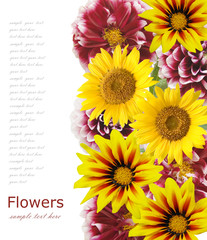 Flower background isolated on white with sample text