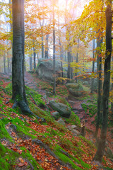 Autumn forest in the mountains