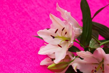 birthday flowers - pink - Geburtstagsblumen, Fond, Hintergrund